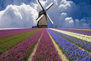 بزرگترین جشنواره گل در هلند
